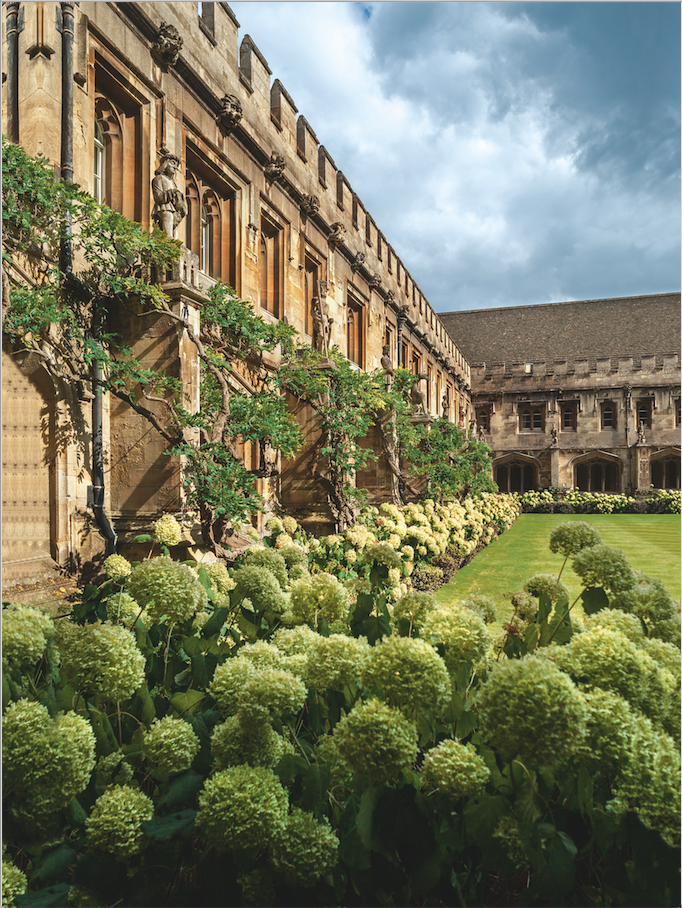 The cloister of Magdalen College, with hydrangeas in the foreground, and wisteria growing on the building behind