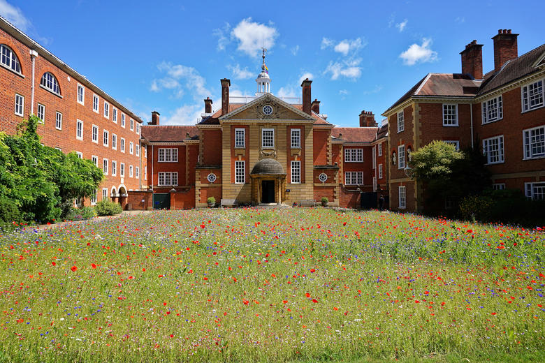 LMH Talbot Hall, Quadrangle, Wild Flower Meadow
