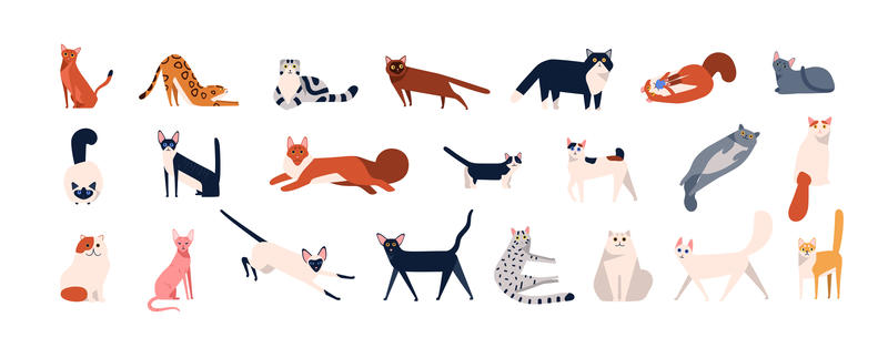 A selection of cats