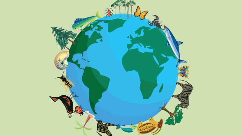 A drawing of the earth, encircled by various flora and fauna