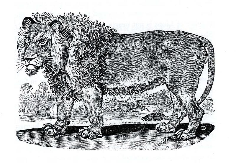 A drawing of a lion