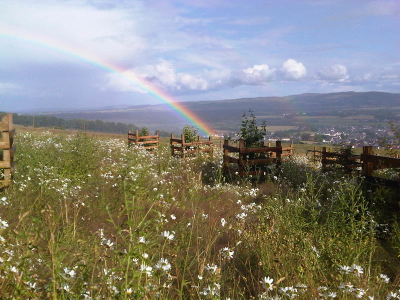 A close up of a wild flower meadow, with a rainbow in the sky above it