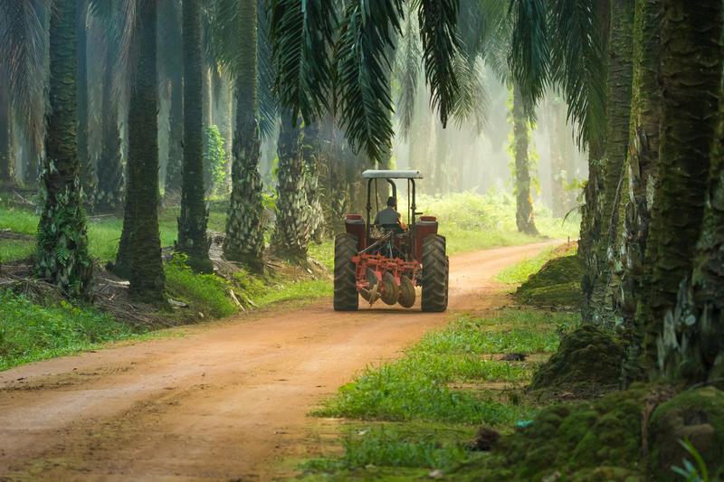 A tractor driving along a dirt road through a rainforest