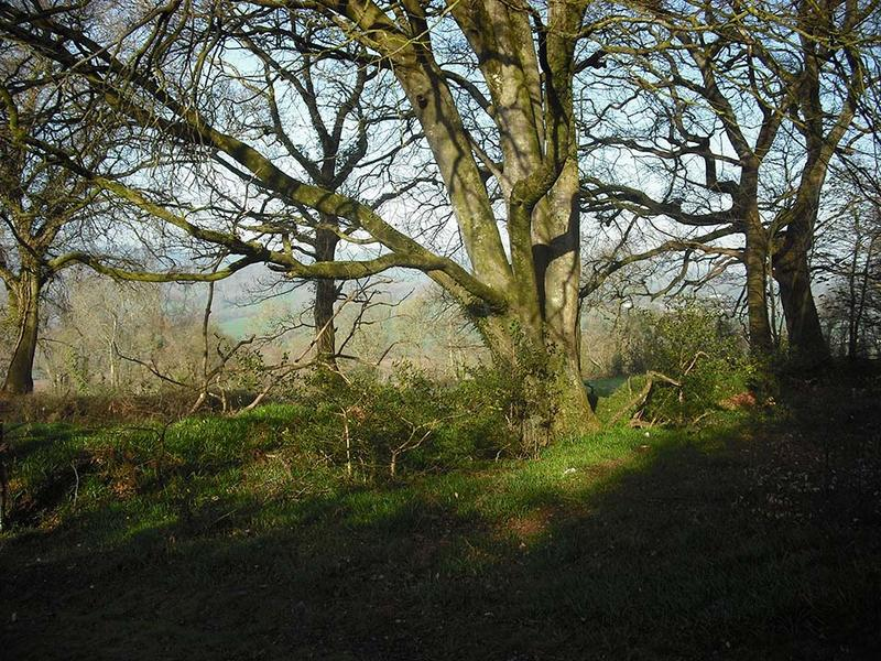 A small clearing in a woodland